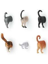 Cat butt