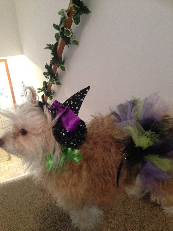 Honey's Witch Costume